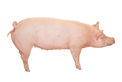 Stewardship Your Kids and the 4 Little Pigs